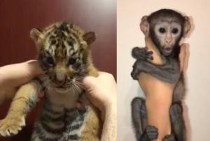 How Instagram Celebrities Promote Dubai's Underground Animal Trade